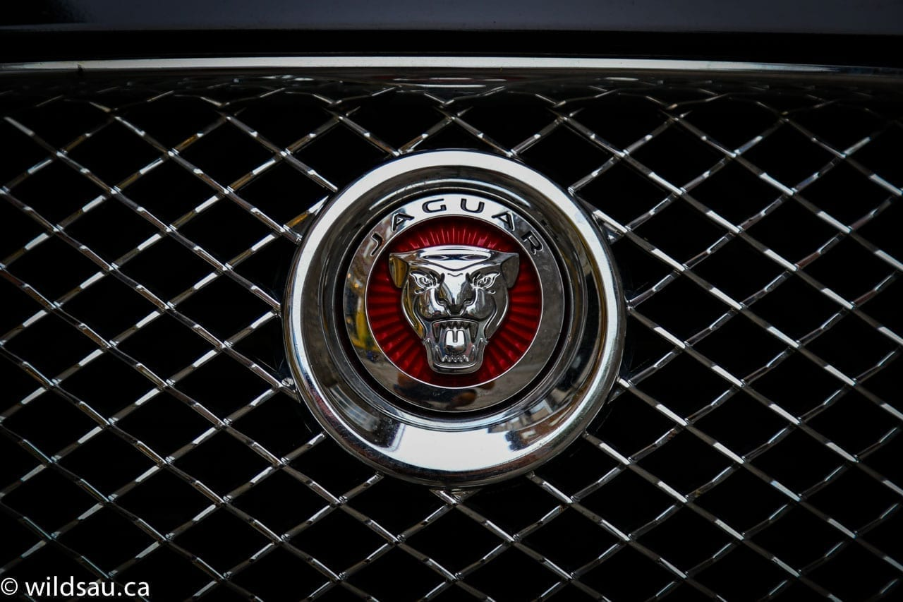 Jaguar grille badge